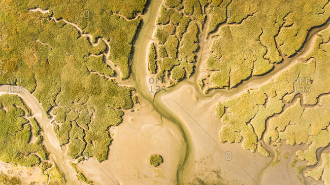 Abstract aerial view of wetlands landscape in the Netherlands.