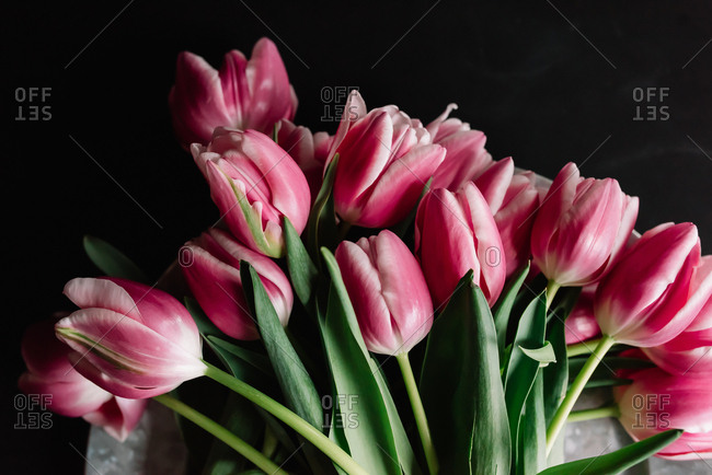 Close up of a bunch of tulips