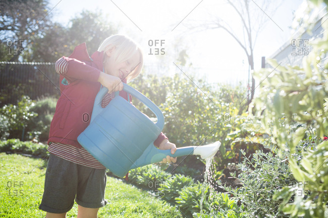 Boy watering plants in the garden on a sunny day