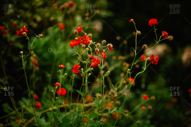 Red flowers growing in a garden