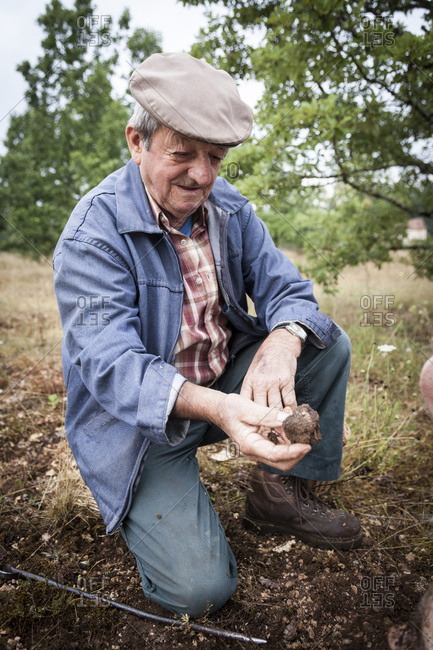 Lalbenque, France: July 28, 2012: Michel Astruc showing freshly unearthed truffle found by Kiki the pig