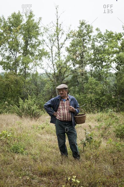 Older man truffle hunting in a truffle grove