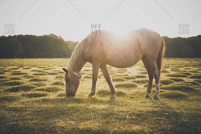 Horse grazing on field during sunny day