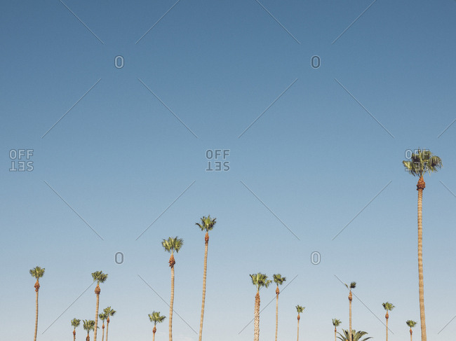 Low angle view of palm trees growing against clear sky, Coalinga, California, USA