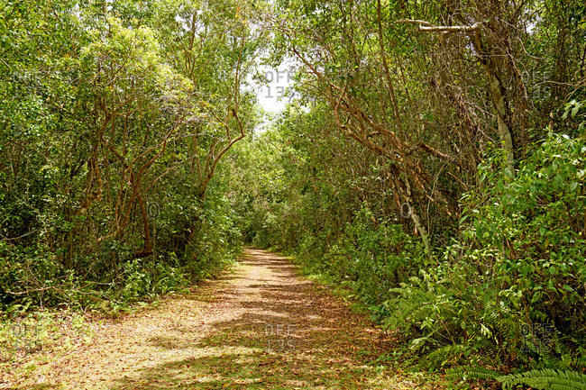 Path through dense forest in the Everglades National Park, Florida