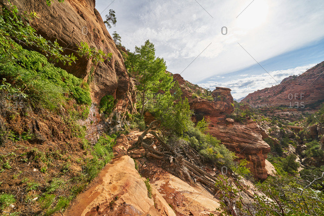 Plants growing on canyon side in Zion National Park, Utah