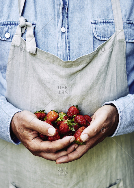 Handful of fresh strawberries, held by a farmer wearing an apron