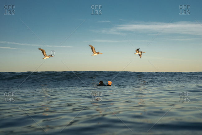 Surfer paddling as three Brown Pelicans fly over