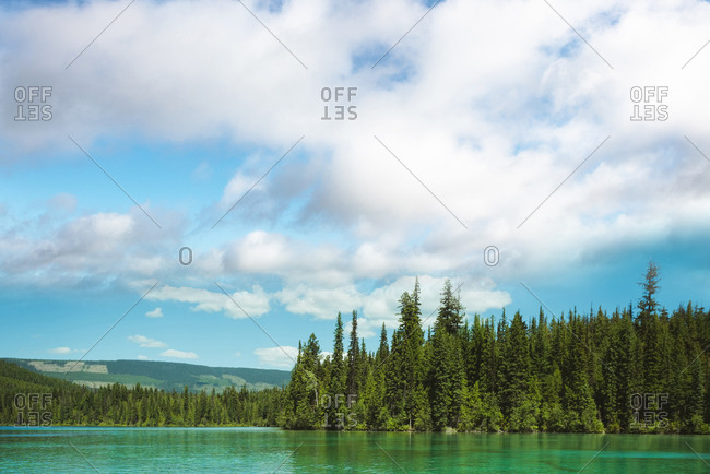 Green trees in forest and lake on a sunny day