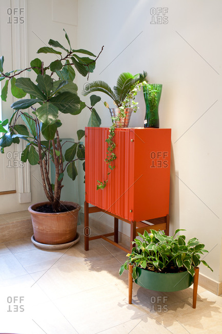 Red cabinet and plants in a home improvement store