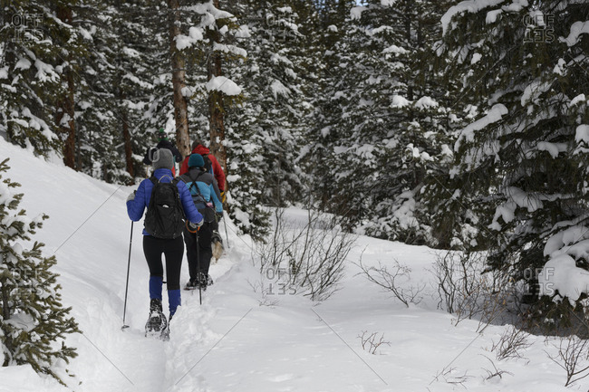 Rear view of hikers hiking in snow covered forest