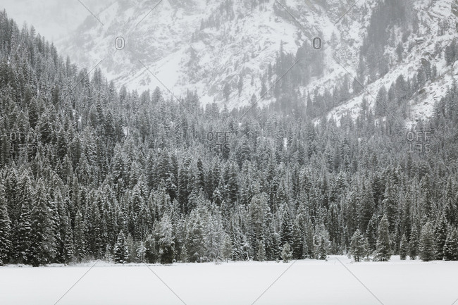 Scenic view of trees on snow covered field