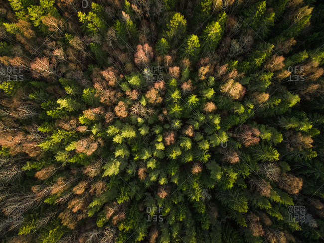 Aerial view of a forest during fall season in Estonia