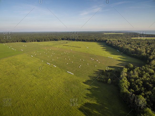 Aerial view of forest and straw bale in farmland in Estonia