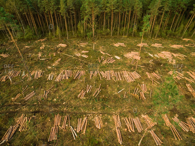 Aerial view of a logging in Estonia