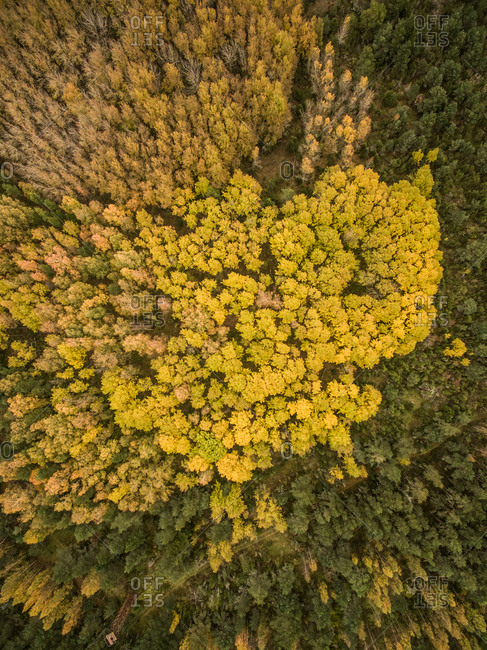 Aerial view of colorful forest in Estonia