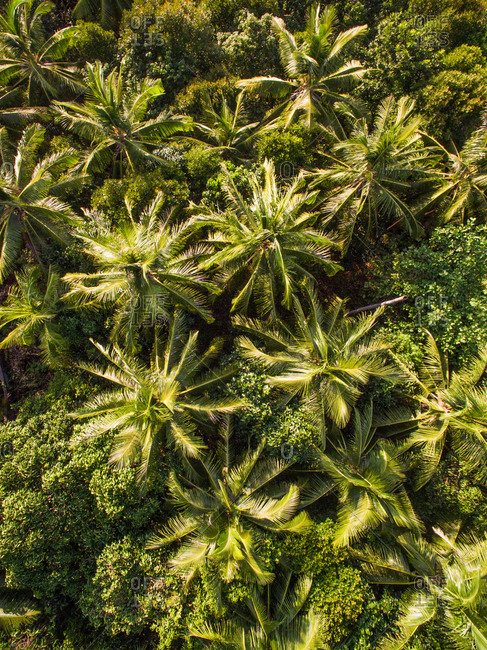 Abstract aerial view of palm trees in Thailand