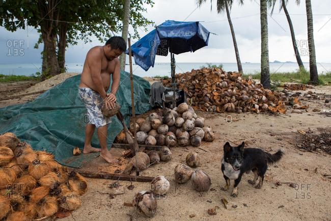 Koh Samui, Thailand - October 7, 2017: A man opening coconut shells in Koh Samui, Thailand