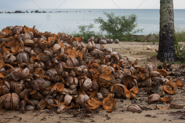 Coconut shells on a beach in Koh Samui, Thailand