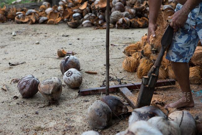 A man peeling coconuts in Koh Samui, Thailand