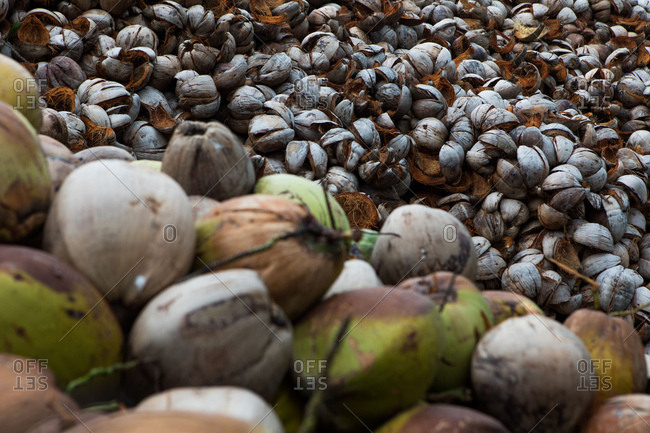 Heap of coconuts in Koh Samui, Thailand