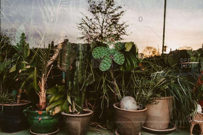 Plants filling a shop window in Amsterdam