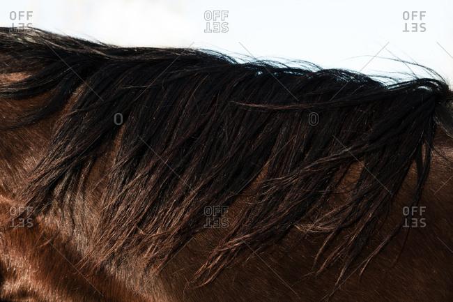 Brown horse's mane