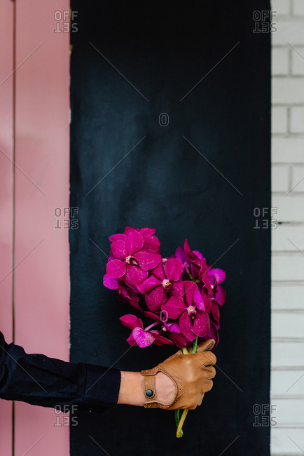 Hand with leather gloves holding lilac orchideas n front of the black wall