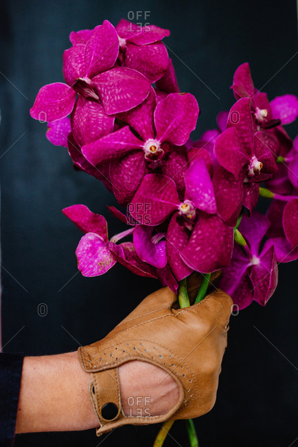Hand with leather gloves holding lilac orchids in front of a black wall