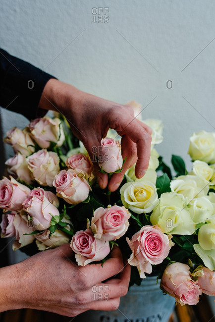 Hands selecting roses from big pile of beautiful roses placed in metal vase in flower shop