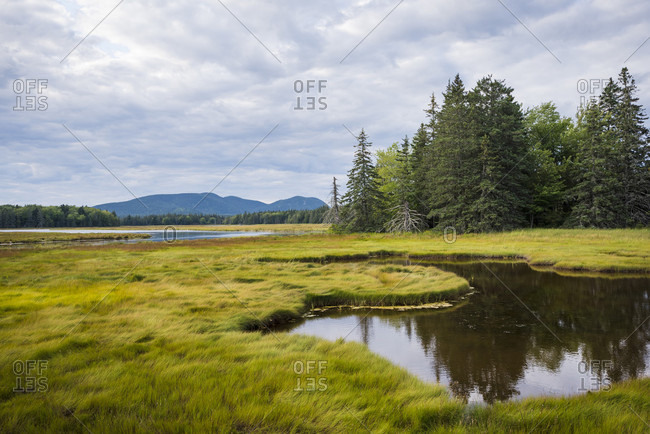 Marsh scenery with forest, Bar Harbor, Maine, USA