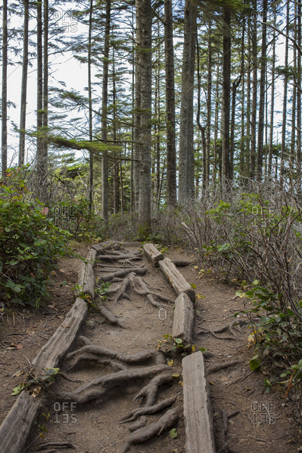 Trail in forest with tree roots, Cape Flattery, Washington State, USA