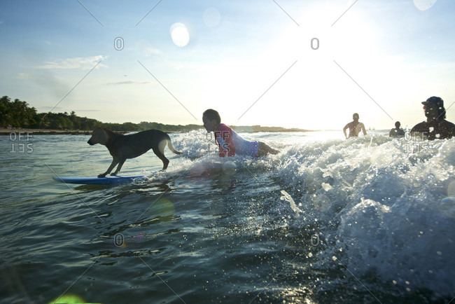 Tamarindo, Costa Rica, Costa Rica - December 14, 2013: Dog surfing with people in Tamarindo, Costa Rica