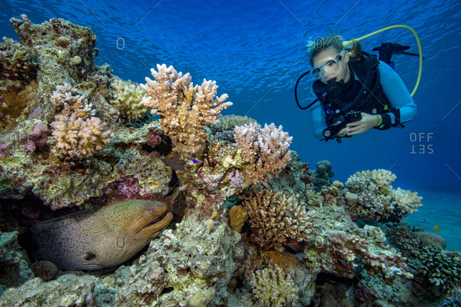 Egypt- Red Sea- Hurghada- scuba diver and yellow-edged moray