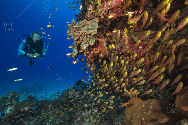 Egypt- Red Sea- Hurghada- scuba diver at coral reef