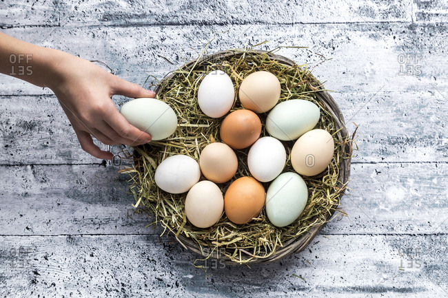 Different eggs- white- brown- light brown and green eggs