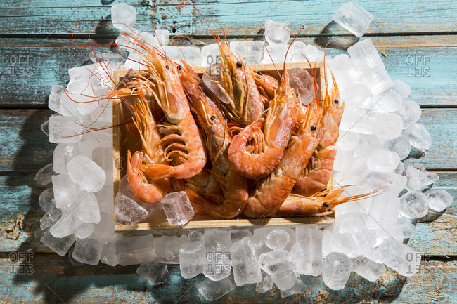 Argentine red shrimps on ice