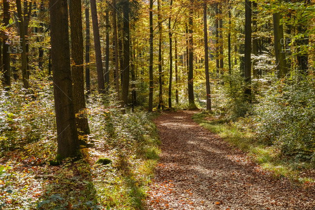 Germany- Bavaria- Lower Bavaria- near Kelheim- Weltenburger Enge- forest path in autumn