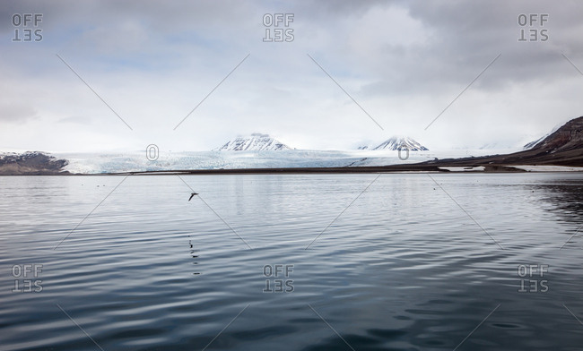 Solitary bird flying over calm sea in the Svalbard Archipelago
