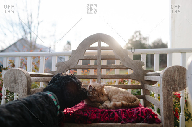 Curious dog smelling sleepy cat on porch
