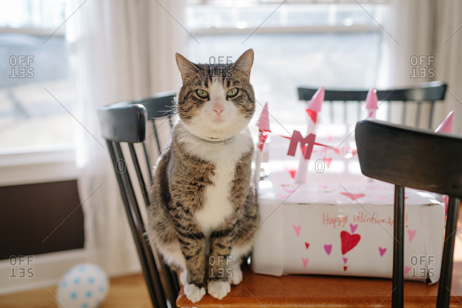 Cat sitting on dining room table next to handmade valentine's day gift
