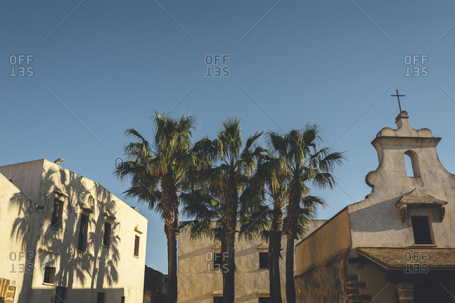 Tall palm trees between building and town church