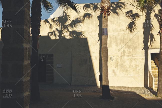 Sunset casting palm tree shadows against stucco building