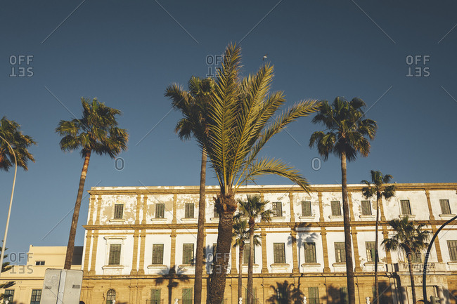 Palm trees at sunset in front of old large building