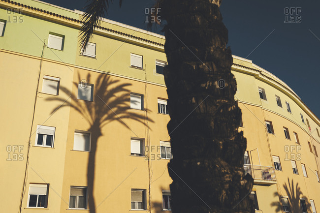 Close up of palm tree trunk in front of large sunlight building