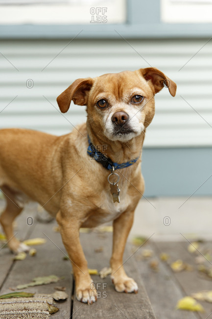 Mixed breed dog standing waiting for owner