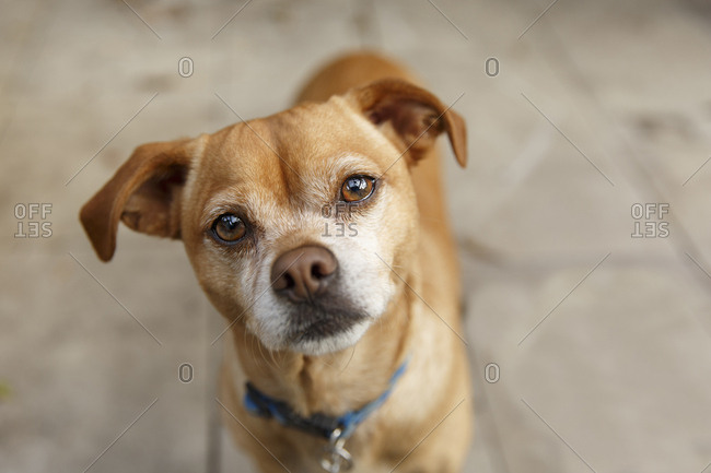 Mixed breed dog looking up with head cocked