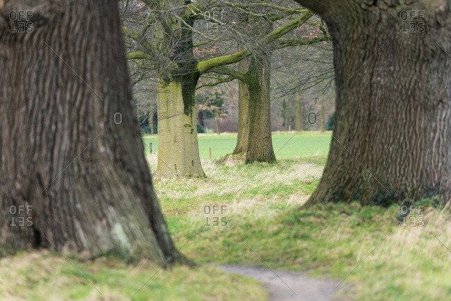 Big old tree trunks with pathway