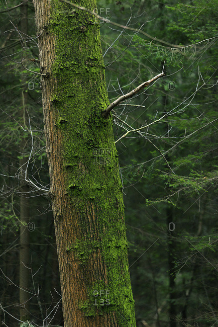 Tree trunk in a forest covered with moss