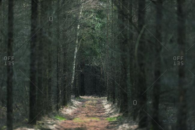 Eerie path in dark winter forest
